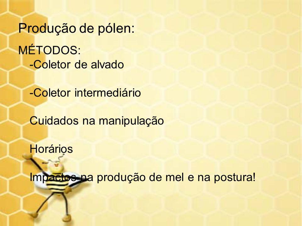 Produção de pólen: MÉTODOS: -Coletor de alvado -Coletor intermediário