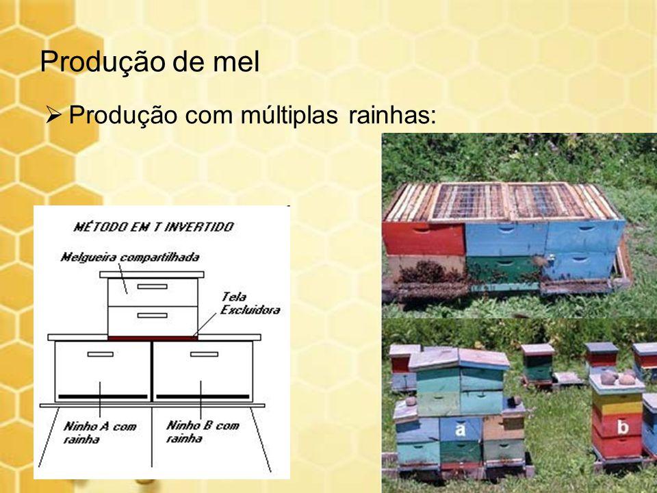 Produção de mel Produção com múltiplas rainhas: