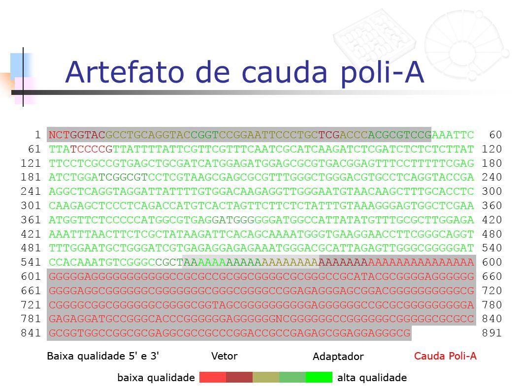 Artefato de cauda poli-A
