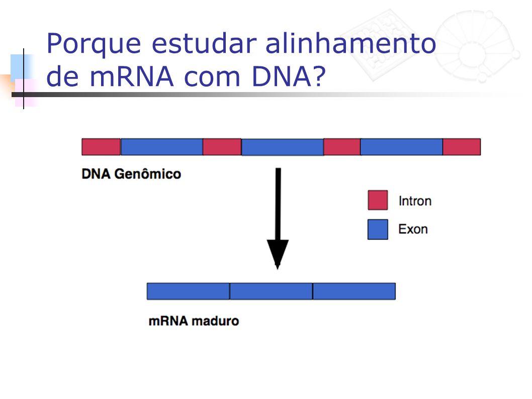 Porque estudar alinhamento de mRNA com DNA
