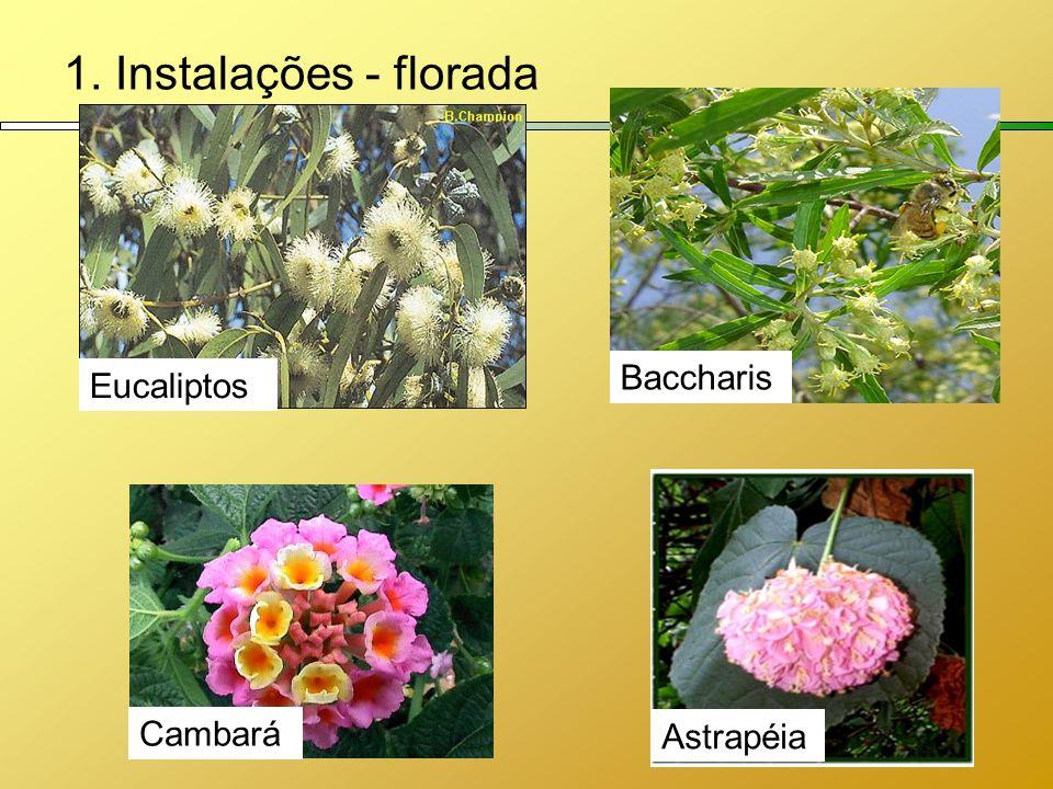1. Instalações - florada Baccharis Eucaliptos Astrapéia Cambará