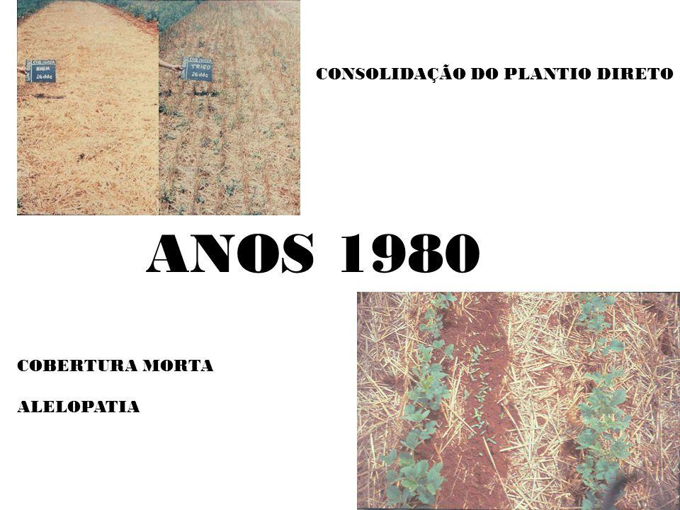 CONSOLIDAÇÃO DO PLANTIO DIRETO