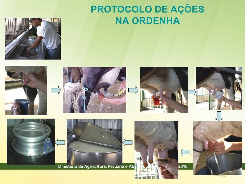 PROTOCOLO DE AÇÕES NA ORDENHA