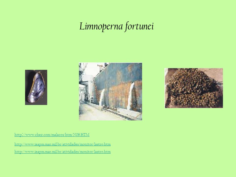 Limnoperna fortunei http://www.chez.com/malacos/htm/N08.HTM