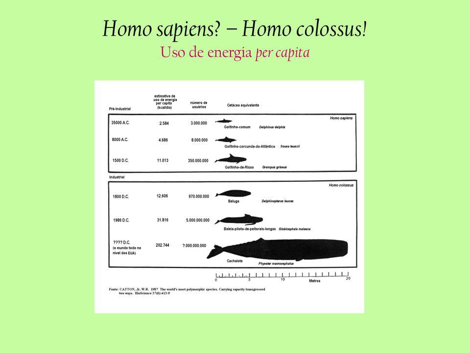 Homo sapiens – Homo colossus! Uso de energia per capita