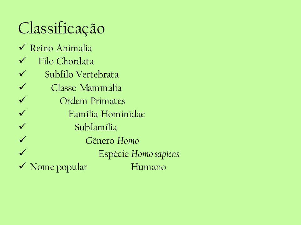 Classificação Reino Animalia Filo Chordata Subfilo Vertebrata