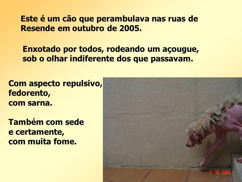 Este é um cão que perambulava nas ruas de Resende em outubro de 2005.