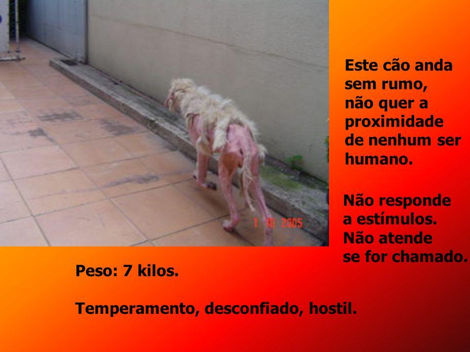 Este cão anda sem rumo, não quer a. proximidade. de nenhum ser. humano. Não responde. a estímulos.