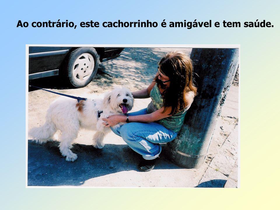 Ao contrário, este cachorrinho é amigável e tem saúde.