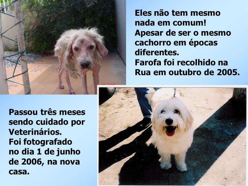Eles não tem mesmo nada em comum! Apesar de ser o mesmo. cachorro em épocas. diferentes. Farofa foi recolhido na.