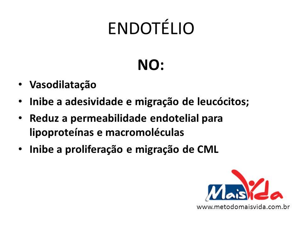 ENDOTÉLIO NO: Vasodilatação