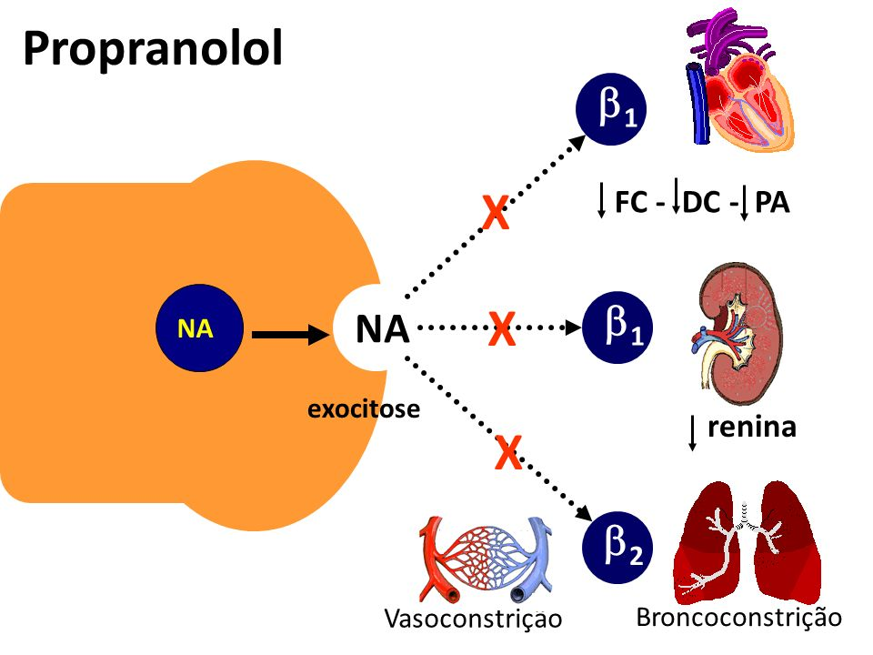 Propranolol X 1 NA 2 FC - DC - PA renina exocitose Vasoconstrição