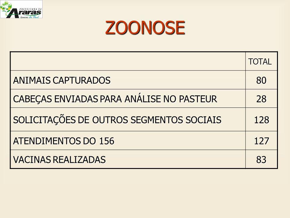ZOONOSE ANIMAIS CAPTURADOS 80 CABEÇAS ENVIADAS PARA ANÁLISE NO PASTEUR