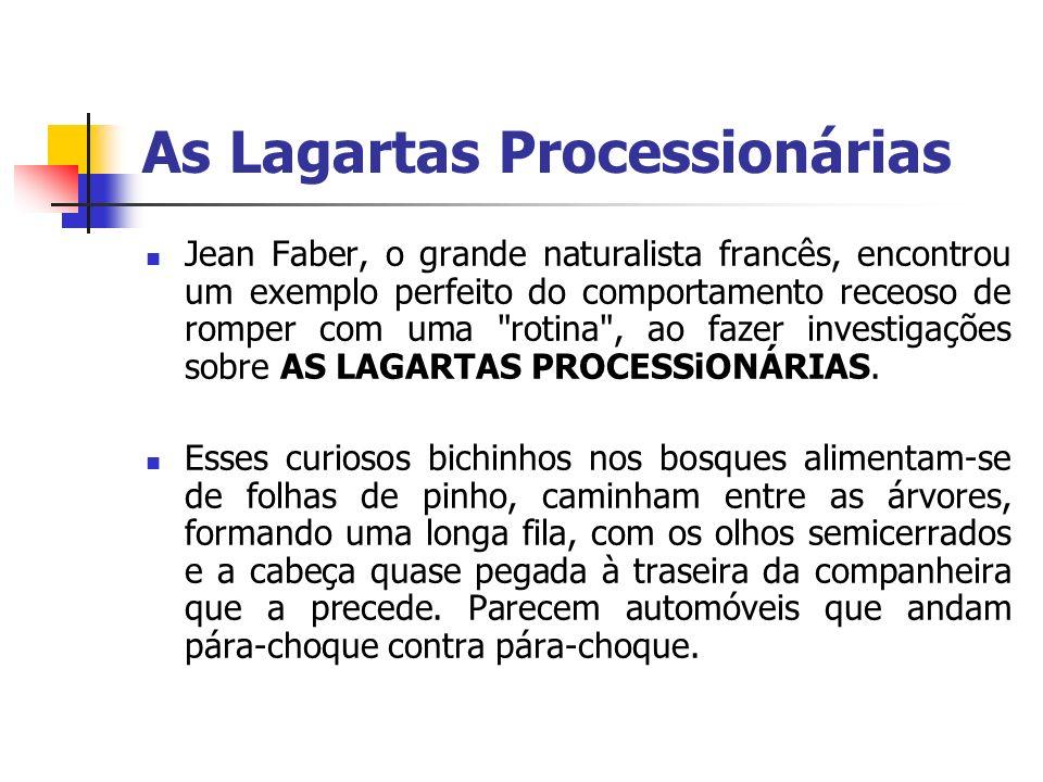 As Lagartas Processionárias