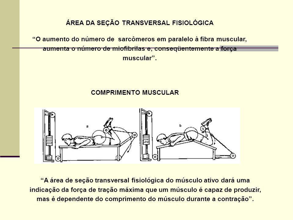 ÁREA DA SEÇÃO TRANSVERSAL FISIOLÓGICA