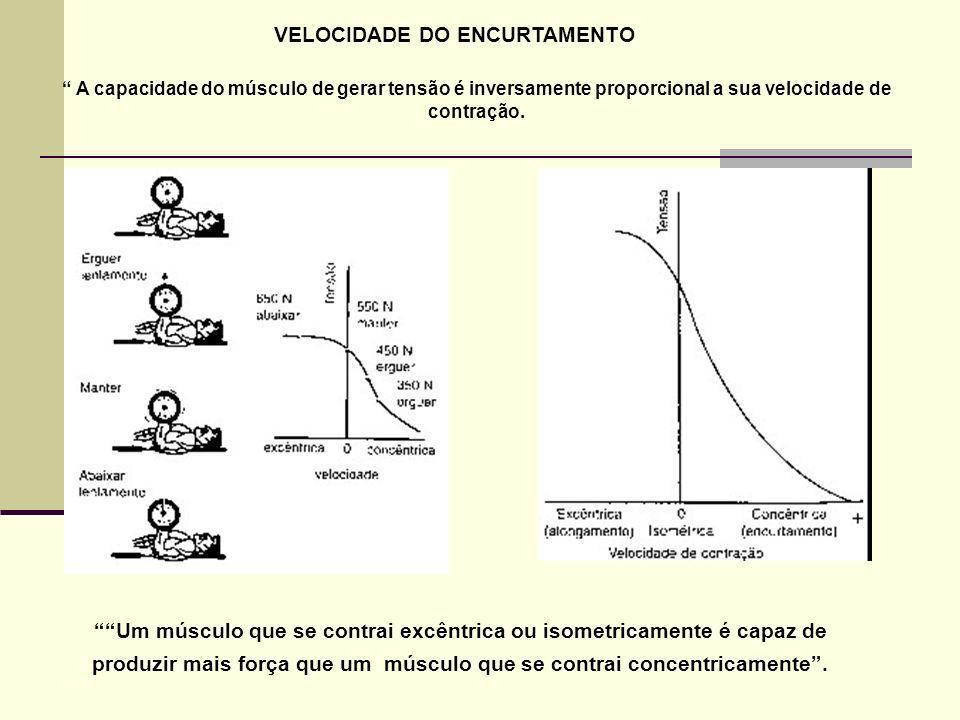 VELOCIDADE DO ENCURTAMENTO