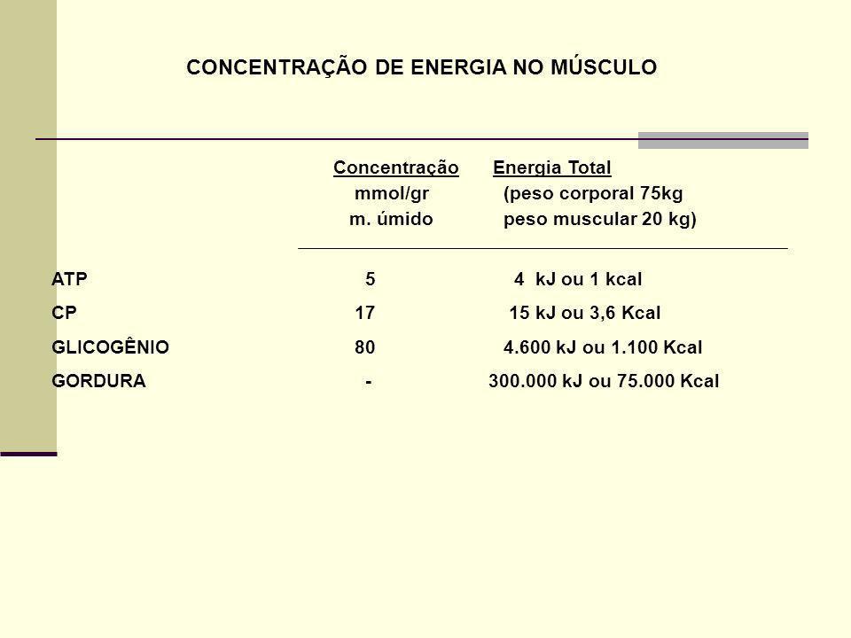 CONCENTRAÇÃO DE ENERGIA NO MÚSCULO
