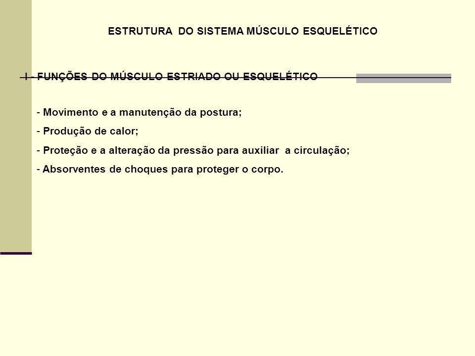 ESTRUTURA DO SISTEMA MÚSCULO ESQUELÉTICO