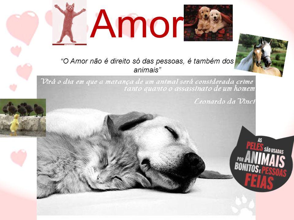 O Amor não é direito só das pessoas, é também dos animais