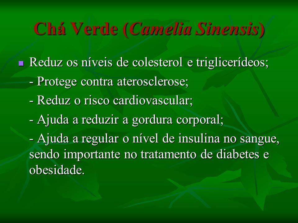 Chá Verde (Camelia Sinensis)