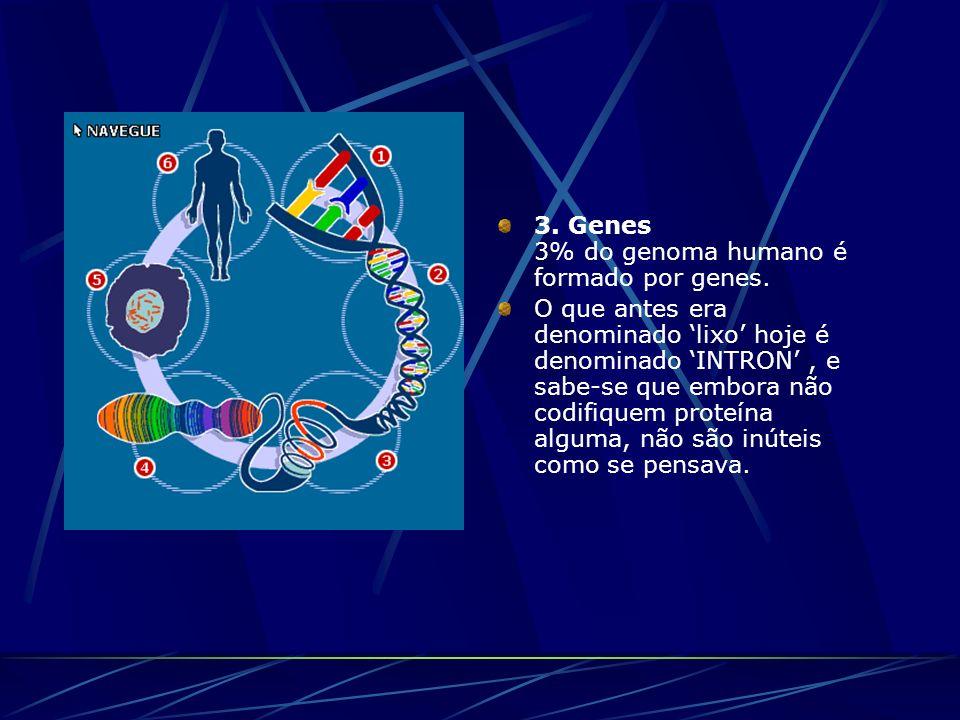 3. Genes 3% do genoma humano é formado por genes.