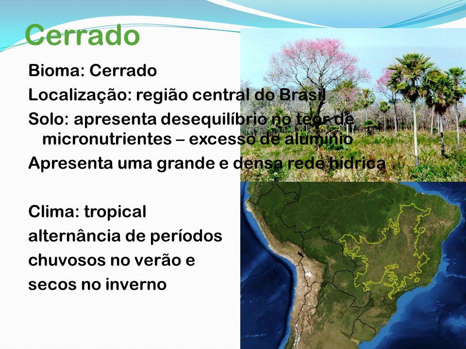 Cerrado Bioma: Cerrado Localização: região central do Brasil