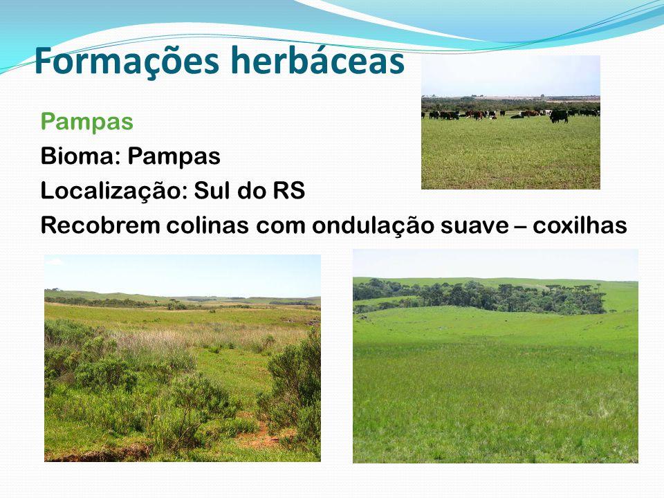 Formações herbáceas Pampas Bioma: Pampas Localização: Sul do RS