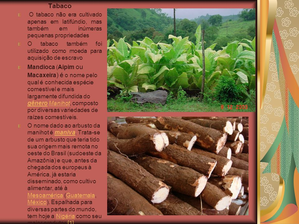 TabacoO tabaco não era cultivado apenas em latifúndio, mas também em inúmeras pequenas propriedades.
