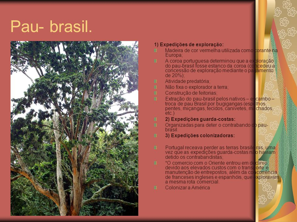 Pau- brasil. 1) Expedições de exploração: