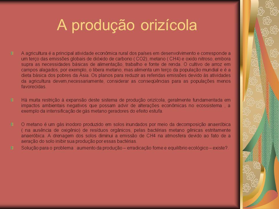 A produção orizícola