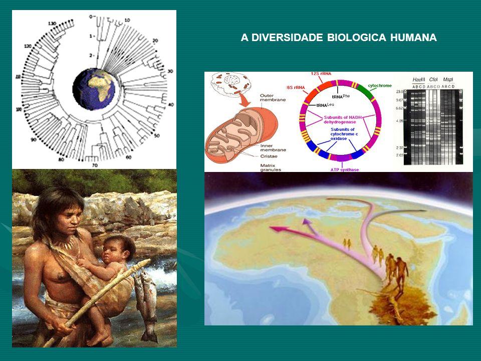 A DIVERSIDADE BIOLOGICA HUMANA