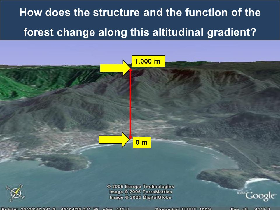 How does the structure and the function of the forest change along this altitudinal gradient