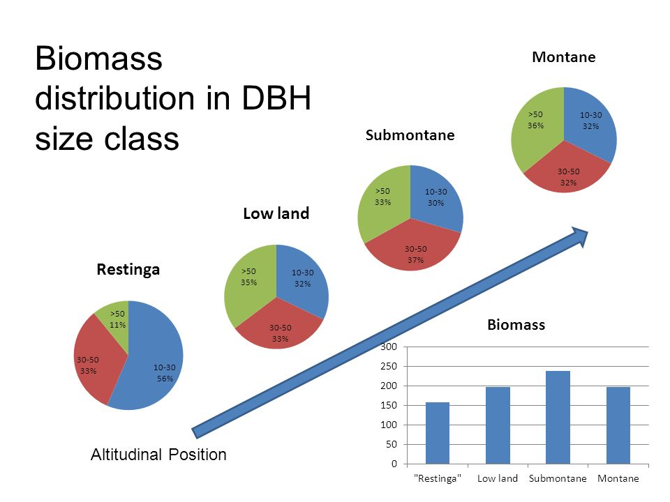 Biomass distribution in DBH size class