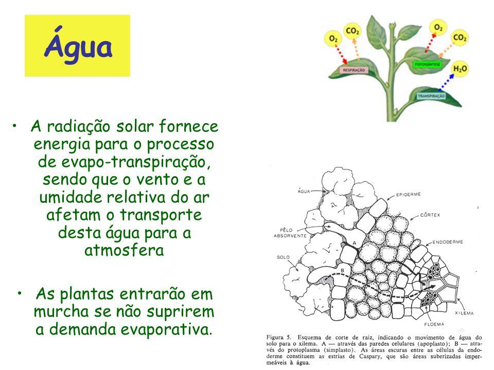 As plantas entrarão em murcha se não suprirem a demanda evaporativa.