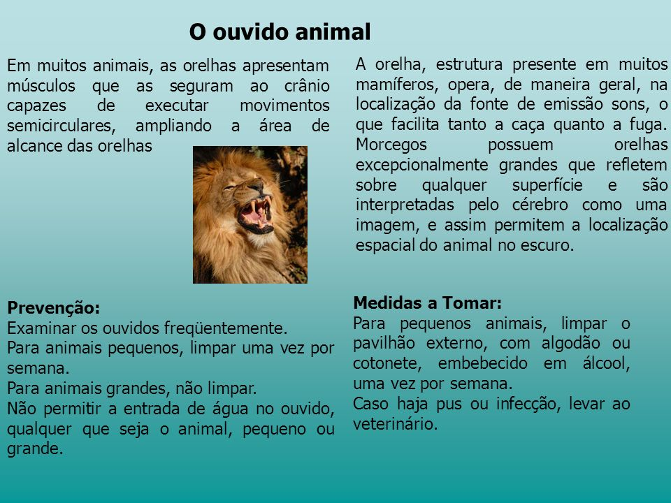 O ouvido animal