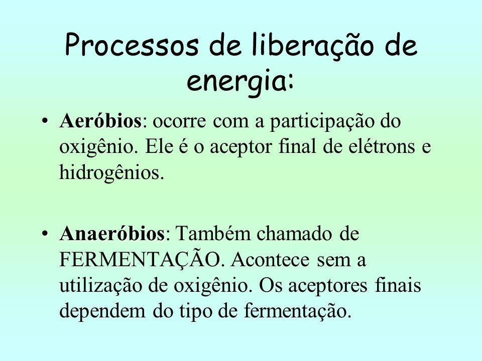 Processos de liberação de energia: