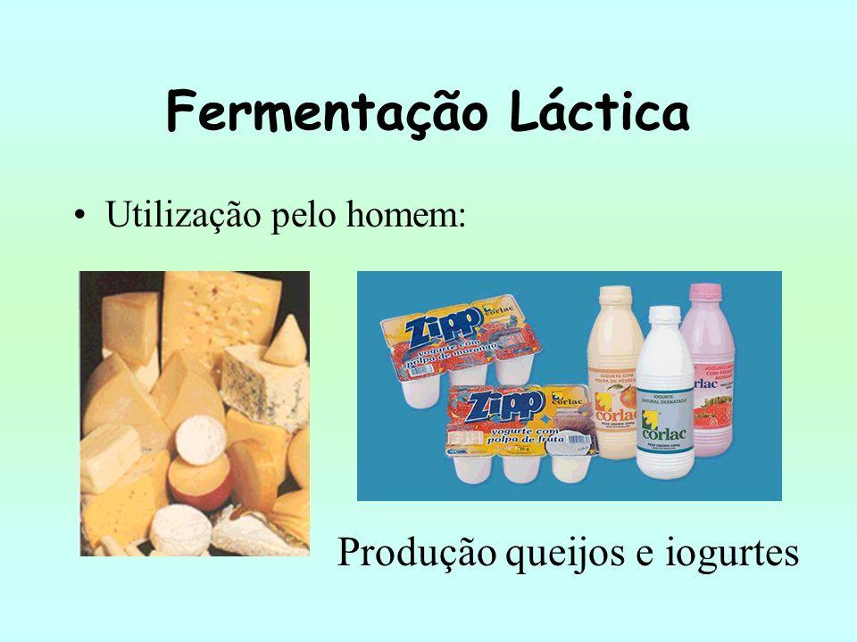 Fermentação Láctica Utilização pelo homem: Produção queijos e iogurtes