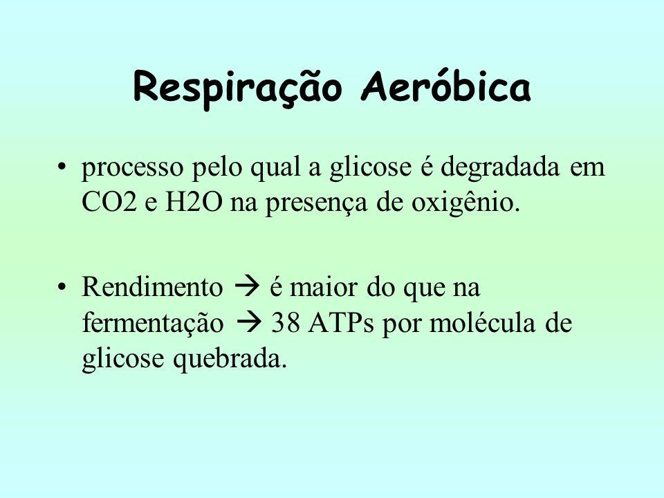 Respiração Aeróbica processo pelo qual a glicose é degradada em CO2 e H2O na presença de oxigênio.