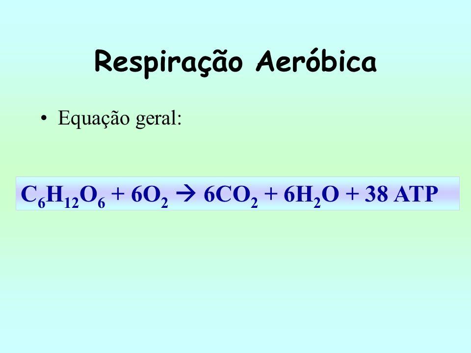 Respiração Aeróbica C6H12O6 + 6O2  6CO2 + 6H2O + 38 ATP