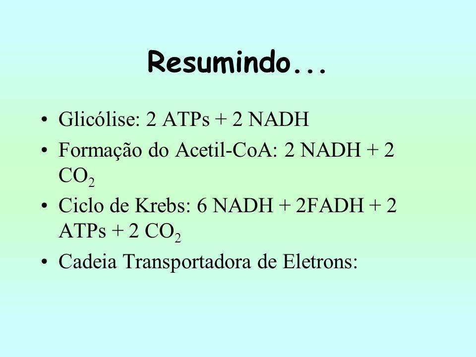 Resumindo... Glicólise: 2 ATPs + 2 NADH