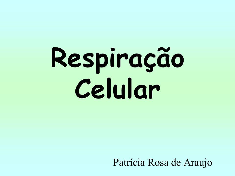 Patrícia Rosa de Araujo