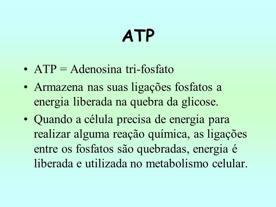ATP ATP = Adenosina tri-fosfato