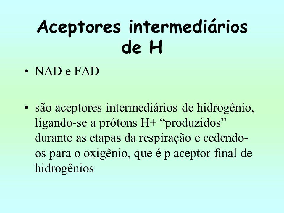 Aceptores intermediários de H