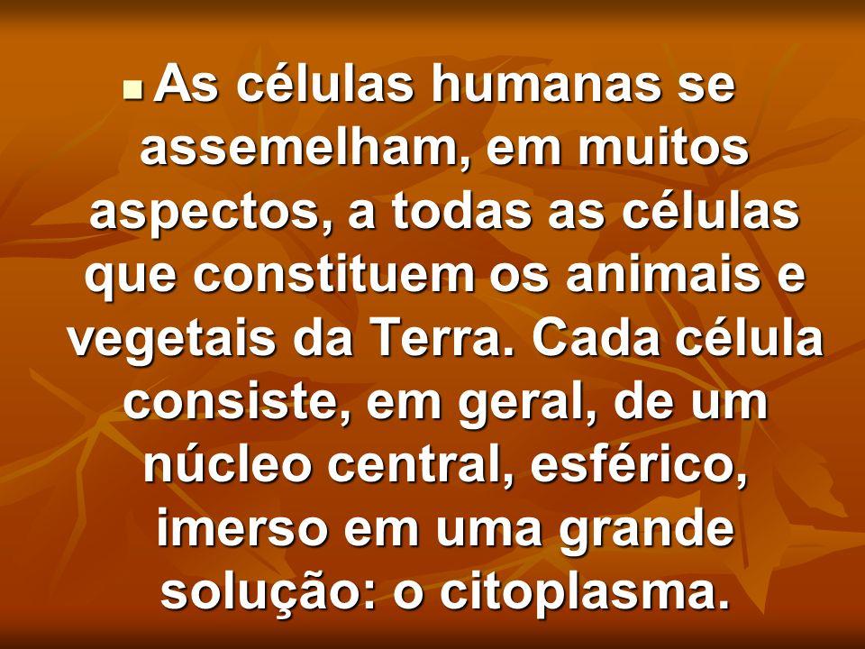 As células humanas se assemelham, em muitos aspectos, a todas as células que constituem os animais e vegetais da Terra.