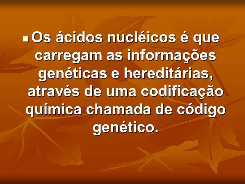 Os ácidos nucléicos é que carregam as informações genéticas e hereditárias, através de uma codificação química chamada de código genético.