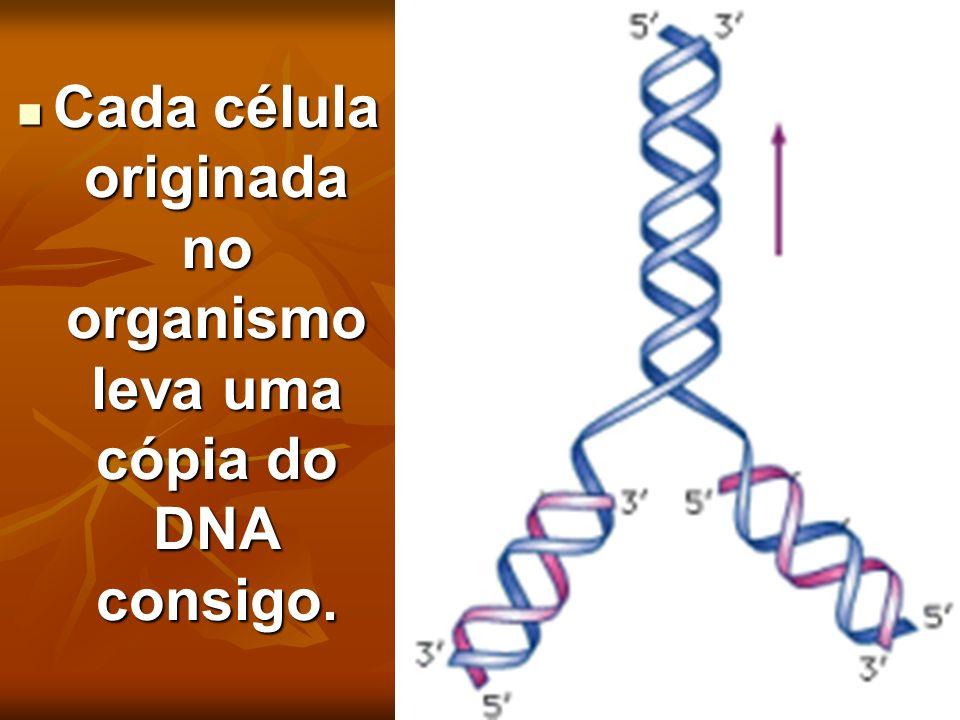 Cada célula originada no organismo leva uma cópia do DNA consigo.