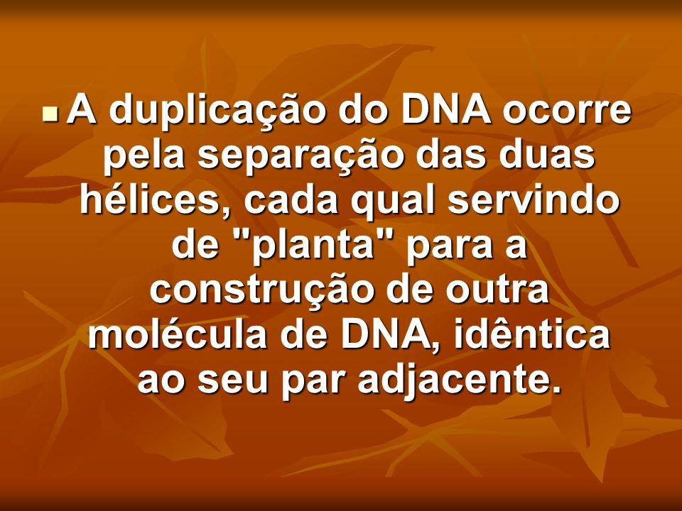 A duplicação do DNA ocorre pela separação das duas hélices, cada qual servindo de planta para a construção de outra molécula de DNA, idêntica ao seu par adjacente.