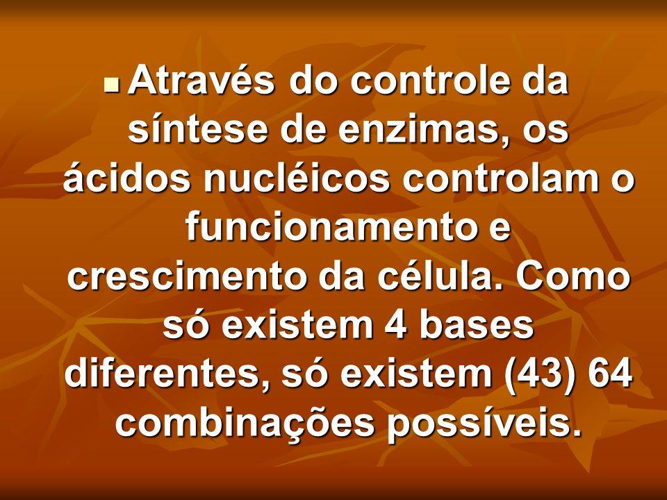 Através do controle da síntese de enzimas, os ácidos nucléicos controlam o funcionamento e crescimento da célula.