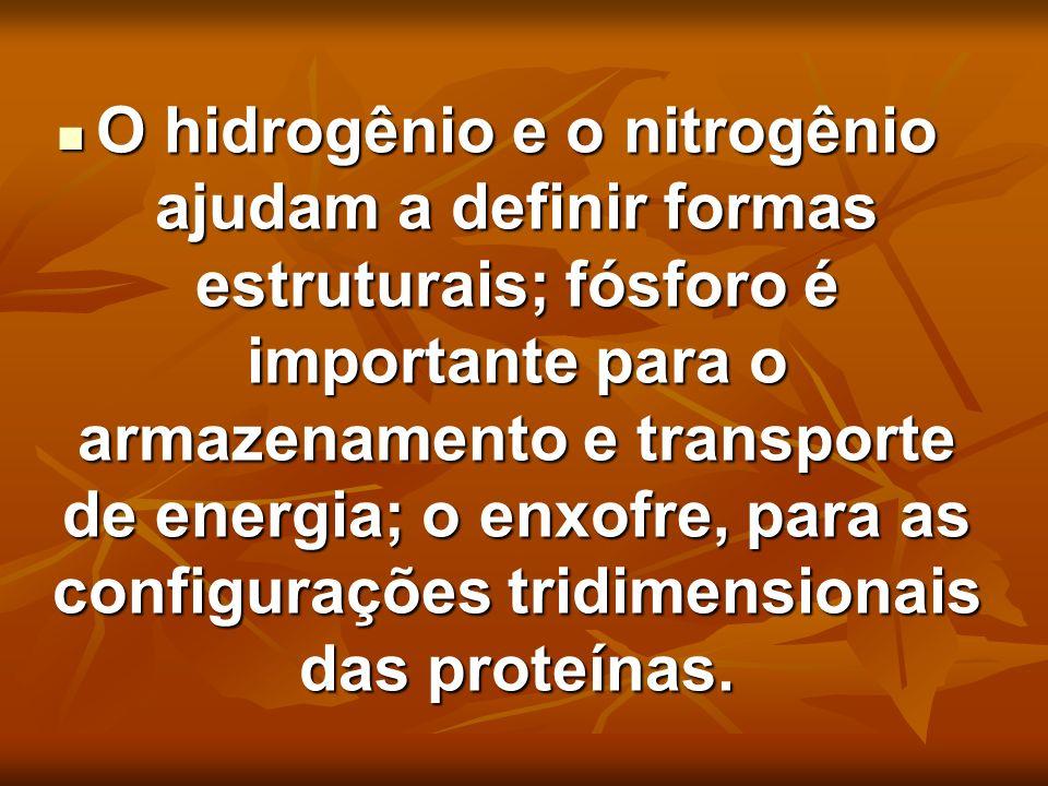 O hidrogênio e o nitrogênio ajudam a definir formas estruturais; fósforo é importante para o armazenamento e transporte de energia; o enxofre, para as configurações tridimensionais das proteínas.