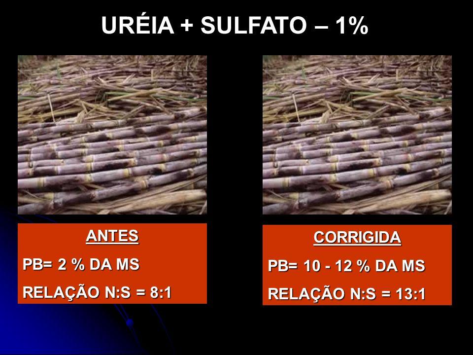 URÉIA + SULFATO – 1% ANTES CORRIGIDA PB= 2 % DA MS PB= 10 - 12 % DA MS